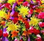 avasflowers-colorful-sympathy-casket-spray_max